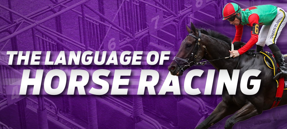 Glossary of Horse Racing Terms